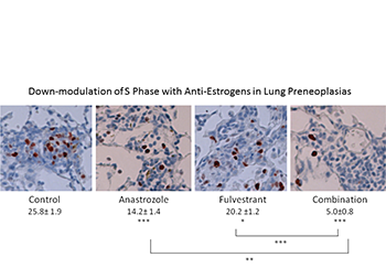 Down-modulation of S Phase with Anti-Estrogens in Lung Preneoplasias