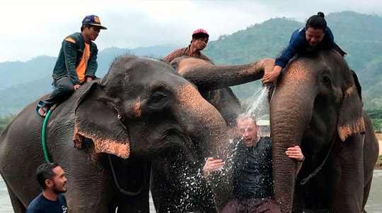 People playing with elephants
